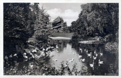 Vintage Collectible Postcard, Animals, Hamburg Zoo, 1930, Germany, Lake of ​​Japan, Flamingos