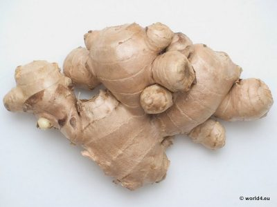 Fresh Ginger Roots. health food. Natural Design.