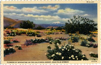 California Desert, Palm Springs, Stephen Willard