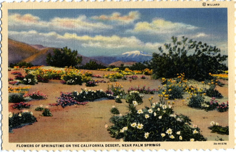 California Desert, Palm Springs, Stephen Willard