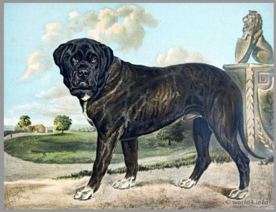 The English Mastiff. Puppies . . Coat Color. Hind-legs and Feet. Back, Loins and Flanks. Fore-legs and Feet. Neck, Chest and Ribs. Ears. Face or Muzzle.  Description or Body. Description of Head.