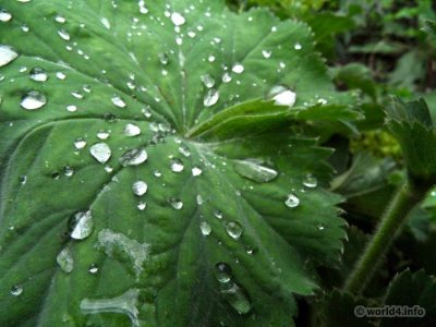 natural plants design on structure, texture, color. Water drops
