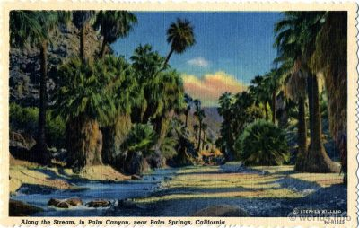 Palm Canyon, Union Oil Company, Natural Color Scenes of the West, Stephen Willard.